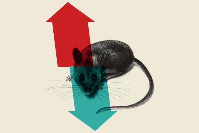 diseño corporativo experimentacion animal susana cid