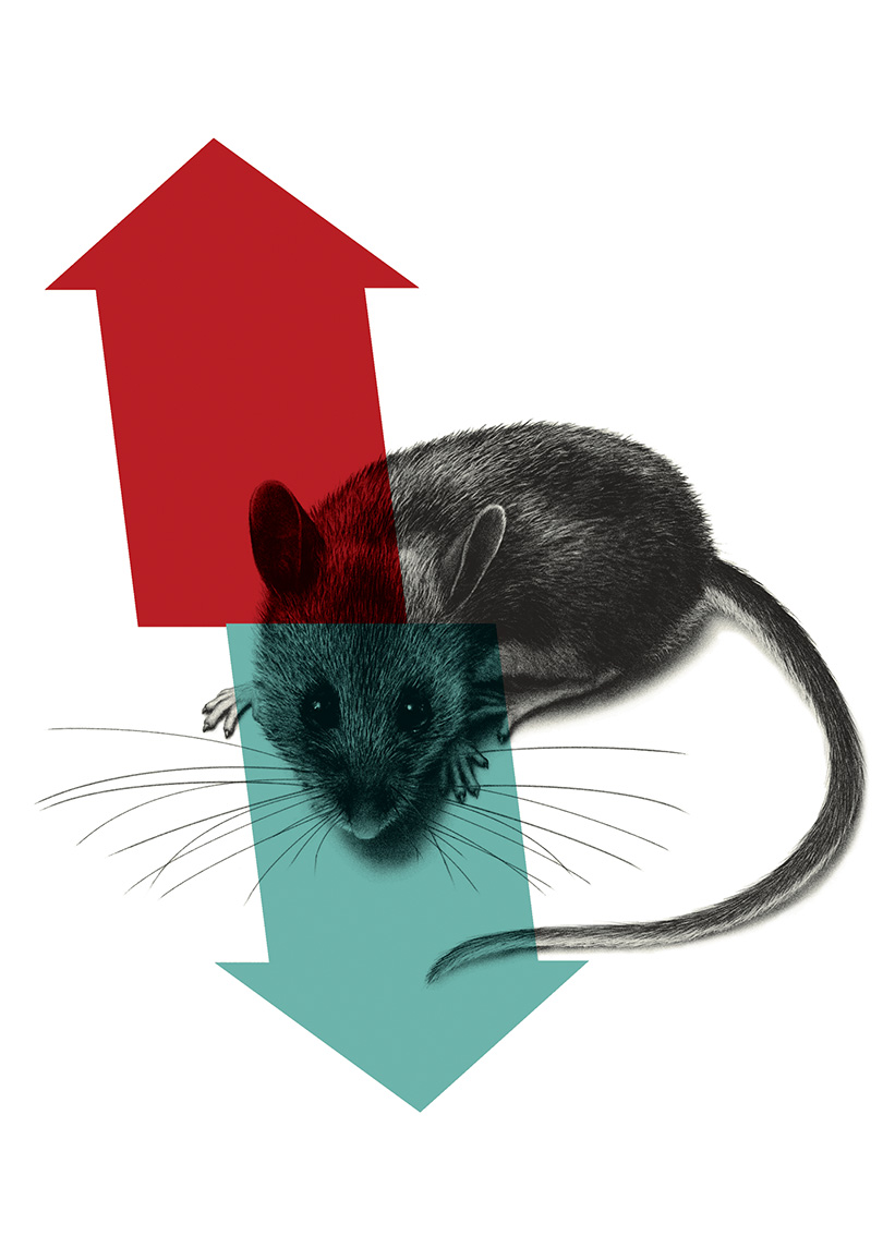 experimentacion animal congreso diseño gráfico